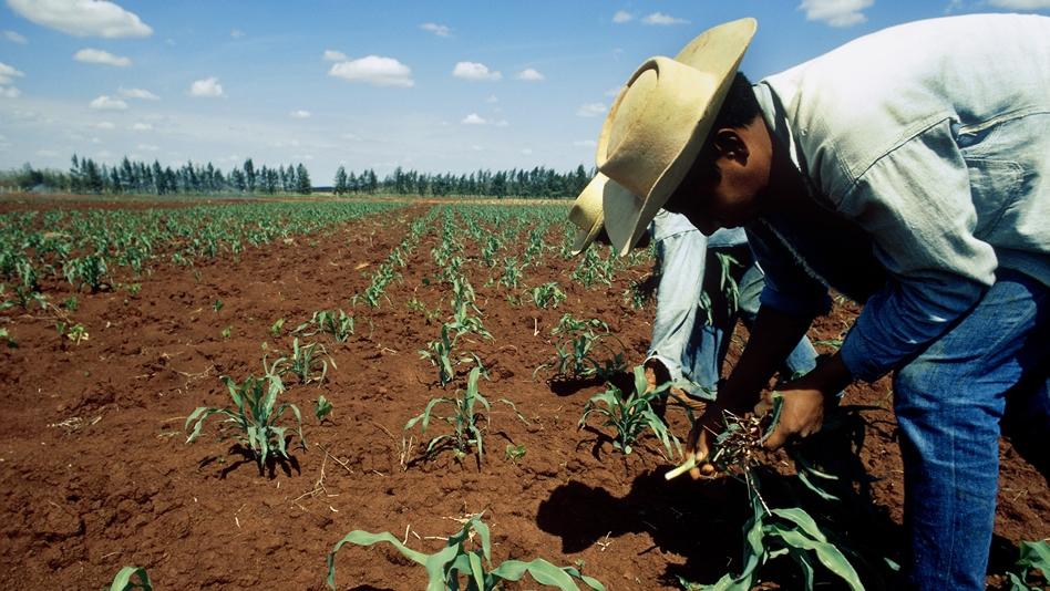 La pandemia deja sin empleo en dos meses a 62,800 campesinos